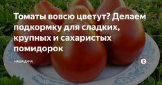 На еду мы предпочитаем помидоры крупных сортов и всех цветов: розовые, желтые, черные, красные! Разломаешь такую – а в разрезе сверкают крупинки сахара – ну, чем не деликатес?Чтобы помидоры стали такими, какими нам нужно, делаем правильную подкормку. Самое время подкормить кусты, чтобы плоды набрали вес и радовали нас своим вкусом.