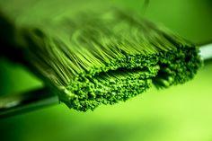 Pea Pod Green - [Explored]