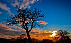 #clouds #landscape #nature #silhouette #sky #sunrise #sunset #trees