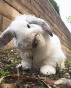 Bonnie Bunny (@bonnie.the.bunbun_) • Instagram