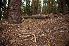 Image result for pine forest floor