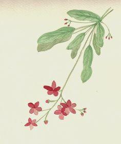 FLOWER FLOWER: 단아한 분위기의 빨간꽃...