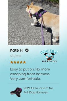 dabcfab4b 18 Best Pug Life Reviews images   Dog Harness, Dog walking, Pug