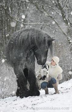 Heart of a Horse Photo by Gosia Makosa