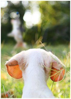 All ears ;)