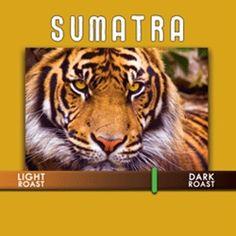 Sumatra Lintong Coffee : A dark roasted coffee with heavy body. Mildly earth, full body, pepper & cedar aromatics with a dark chocolate finish.