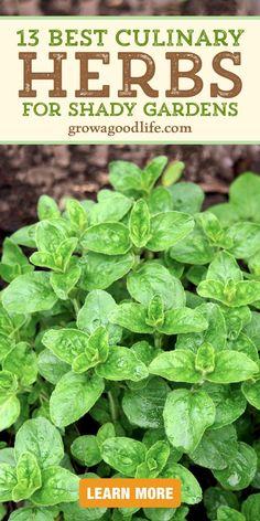 Organic Gardening, Gardening Tips, Organic Farming, Growing Herbs, Growing Vegetables, Spring Vegetable Garden, Vegetable Gardening, Dragon Garden, Spice Garden