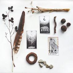 the wild unknown tarot                                                                                                                                                                                 Mais