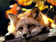 Gallery.ru / Photo # 4 - beautiful animals WILDLIFE - rinatsareva