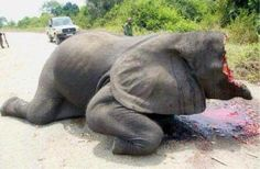 Oe elephant every 15 minutes is killed by poachers
