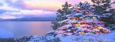 Stunning Christmas Tree Facebook Cover