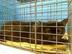 Brooklyn NY.  Hamilton.  Female.  12 yrs.  Dies in a.m.  See Pets on Death Row- Urgent Death on fb.