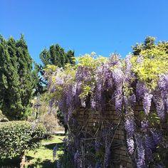 Por aqui tudo azul e florido. #dialindo #sol #lifeisgood #lifestyle #natureza