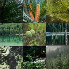 Evergreen Content: Creating For Posterity - Timeless, Quality, Fresh... #evergreencontent #blogging #writing #how-to