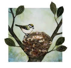 the little nuthatch » Blog Archive » Bird Nest No. 26: Golden-crowned Kinglet