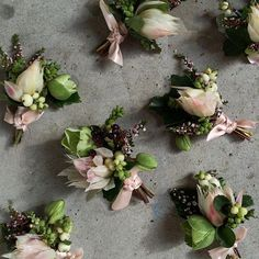 Bouts for the groom and groomsmen with hellebores, blushing bride and snowberry. By @tessadawn ✌️