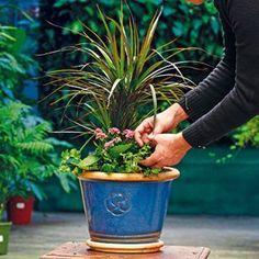 Vysaďte si doma rastliny, ktoré čistia vzduch a dobijú vás energiou