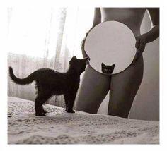 Cat//woman