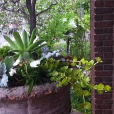 My Denver garden today