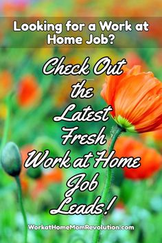 Check Out the Latest Fresh Work at Home Job Leads! If You're Seeking Work from Home, This is the Place to Start! Home-Based Jobs are Posted Every Day on Work at Home Mom Revolution! You Can Make Money from Home!