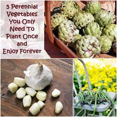 5 Perennial Vegetables You Only Need To Plant Once and Enjoy Forever — Grow a great survival garden with these perennial veggies and rest assured that they will grow and grow year after year!