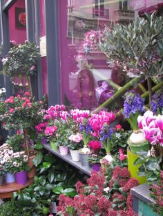 62 Ideas For Flowers Shop Facade Most Beautiful Flowers, Love Flowers, Paper Flowers, Table Flower Arrangements, Flowers For Sale, Petal Pushers, Diy Bouquet, Blooming Flowers, Flower Designs