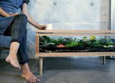 How cool is this coffee table planter? Click here for more inventive indoor gardening ideas.