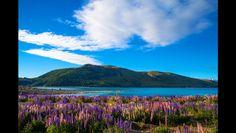 Lake Pukaki Flowers | Media Fact File: Lake-town - Lake Pukaki, Mt Cook ...