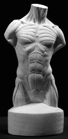 front muscles
