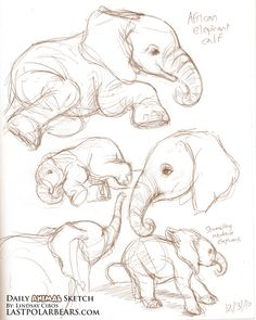 40 Free & Easy Animal Sketch Drawing Ideas & Inspiration - Elefanten - Home Art Drawings Sketches, Easy Drawings, Sketch Drawing, Drawing Ideas, People Drawings, Disney Drawings, Tattoo Sketches, Tattoo Drawings, Drawing Tutorials