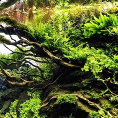 50+ Aquascaping Ideas for Inspirations