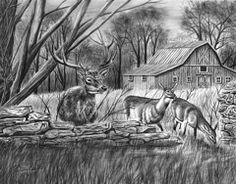 Graphite Drawings - Deer Field   by Peter Piatt