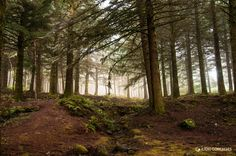 in the forest of alienation by Il�dio Gon�alves on 500px