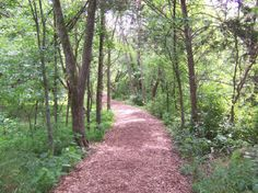 images of Radnor Lake - Bing Images  One of my favorite paths in Nashville....:-)