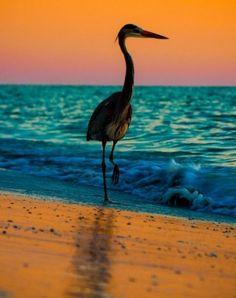 warme oranje/roze kleuren tegenover de koude blauwe kleur van de zee. omdat het alleen in het midden blauw zit blijft dit een warm plaatje.
