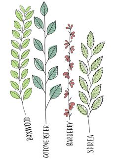 Draw Your Plants to Learn Them by www.lisaorgler.com