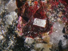 Cryolite dans Villiaumite rouge Ilimaussaq, Greenland Taille=4.5 mm Collection et photo Thomas Witzke