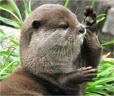 You Otter Be in Pictures