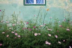 Flowers outside a house in Biertan Transylvania Dracula, Beautiful Gardens, Crock Pot, Countryside, The Outsiders, Mountain, Dreams, Happy, Pretty