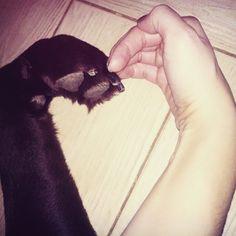 dog, paw, hand, heart, valentines