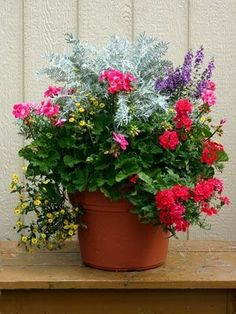 Outdoor container gardening: Planting a beautiful pot of flowers by yolanda
