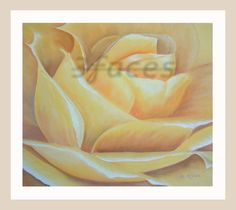 Yellow Rose, 3facesgallery.com  Copyright - repin but please do not reproduce.