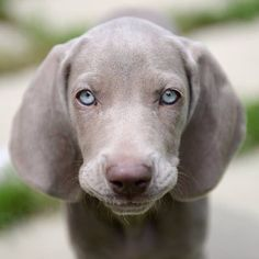 """@candicewardphotography's photo: """"I am using this cute little face to lure you all in to check out my Favourite Photos of 2013 on my blog at candicewardphotography.wordpress.com. #yyc #weim #photosof2013"""""""