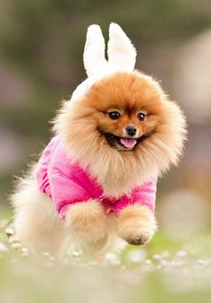 bunny or dog? well i bet he was going for bunny because he's probably in a disguise. So he can jump out from behind all the cats on the block for revenge lol