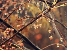Image result for autumn rain