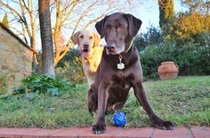 Boomer and Harley in Castiglion Fiorentino, Italy. Flying Dog, Your Dog, Italy, Dogs, Animals, Usa, Italia, Animales, Animaux
