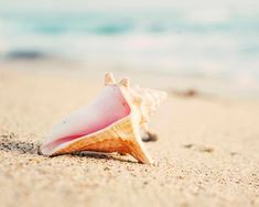 "Sea Shell Photography, Beach Decor, Coastal Home Decor, Pastel, Aqua Peach Pink, Sand, Shoreline, ""Conch Shell"""