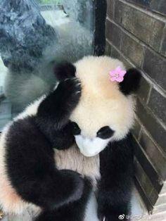 Panda Day, Panda Love, Love Bear, Cute Panda, Happy Animals, Cute Baby Animals, Animals And Pets, Panda's Dream, Panda Wallpapers