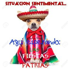 May you fiesta until you siesta! Happy Cinco from your friends at Merchant Club Brown Pride, Mexicans, Make You Smile, Puppy Love, Old School, Teddy Bear, Puppies, India, Cartoon