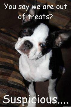 More Doggie News on: 😍📺🔥🐶➡️ https://www.dogmessenger.com #dogmessenger